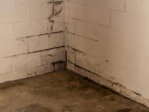 basement mould