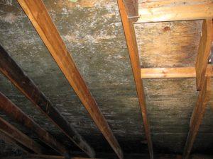 dark wood stains